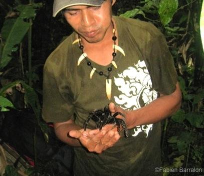 Mygale-Jungle