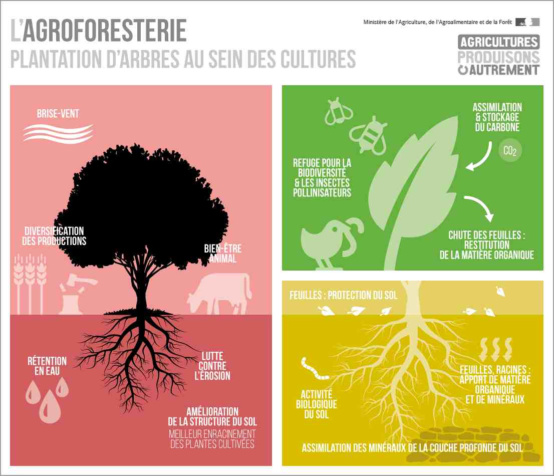 Agroforesterie-Infographie