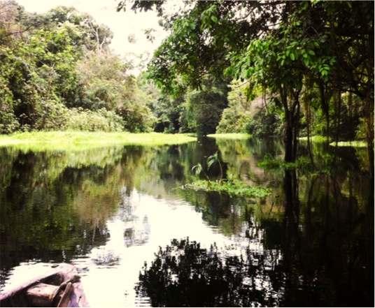 Amazonie-Perou-Pacaya-Samiria