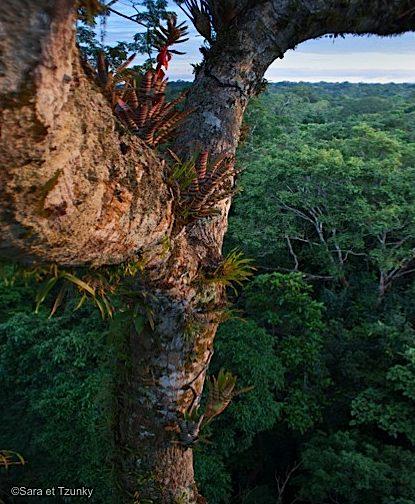 Equateur-Amazonie-Yasuni