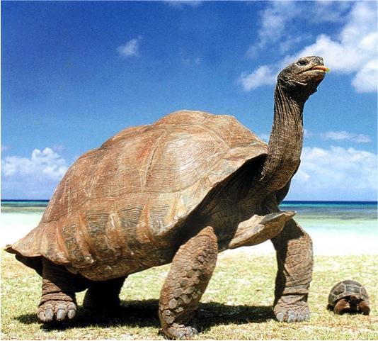 Tortue-Galapago-Equateur