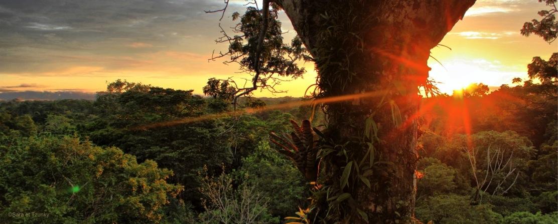 Amazonie-Equateur-Yasuni