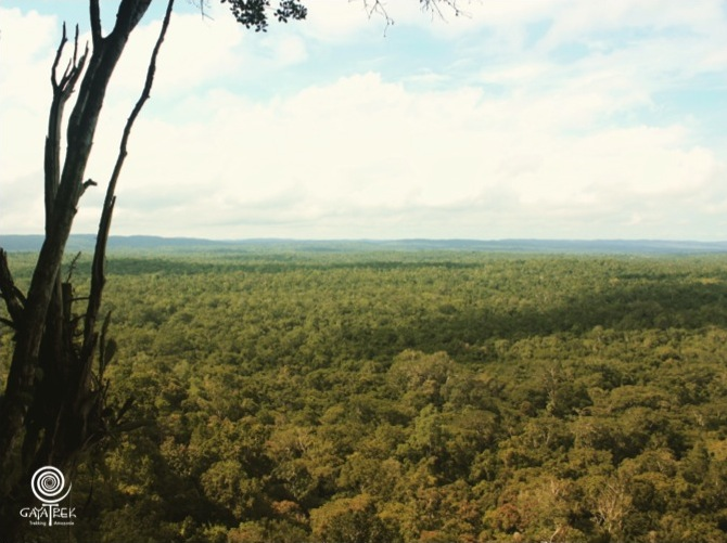 Canopee-Jungle-Peten-Tikal