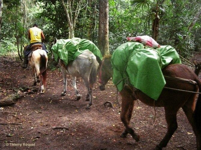 ELMirador-Guatemala-Mule