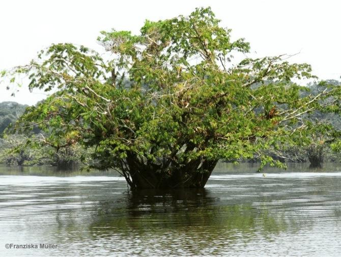 Equateur-Amazonie-Cuyabeno