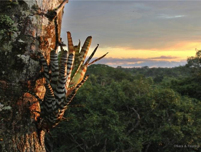 ParcYasuni-Equateur-Waorani