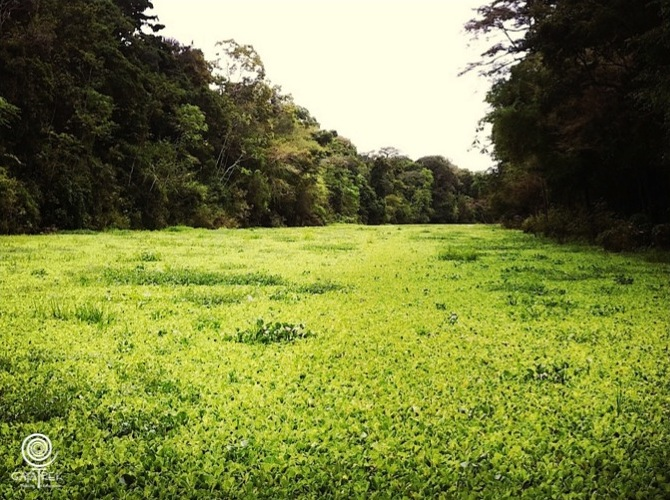 Vegetation-Fleuve-Amazonie
