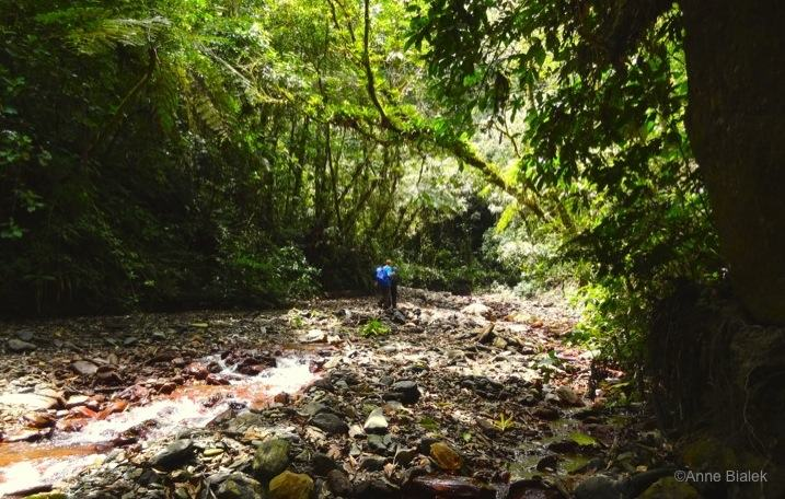 Jungle-Yunga-Treck