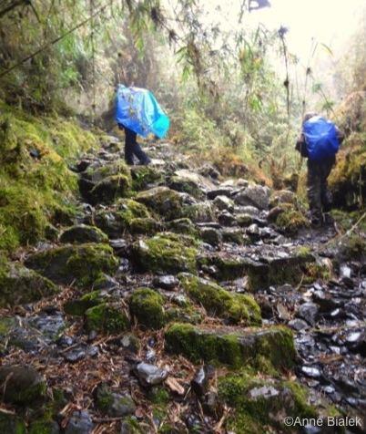 Trekbolivie-Jungle-Andes