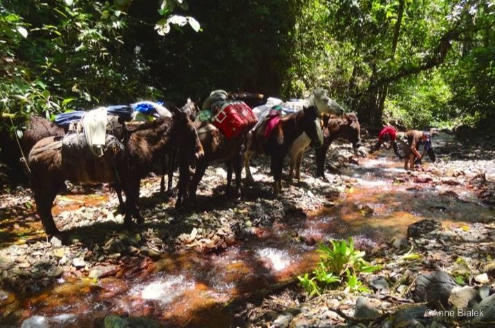 Trekking-Mules-Yunga