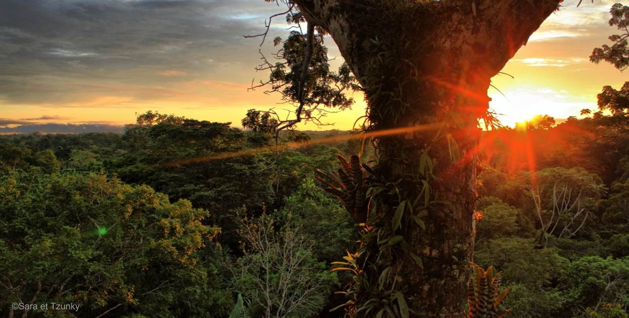 Soleil-Yasuni-Equateur