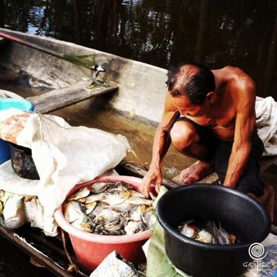 Vendeur-Piranhas-Perou