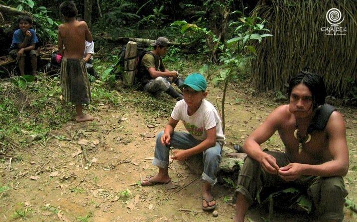 Coca-Bolivie-Jungle
