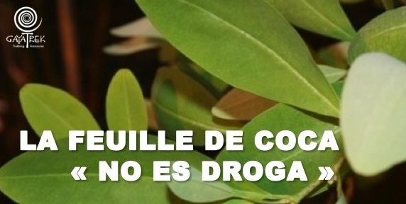Feuille-Coca