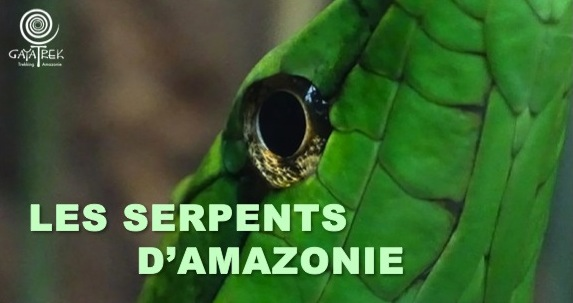 Serpents-Amazonie