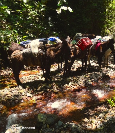 Mules-Trekking-Jungle