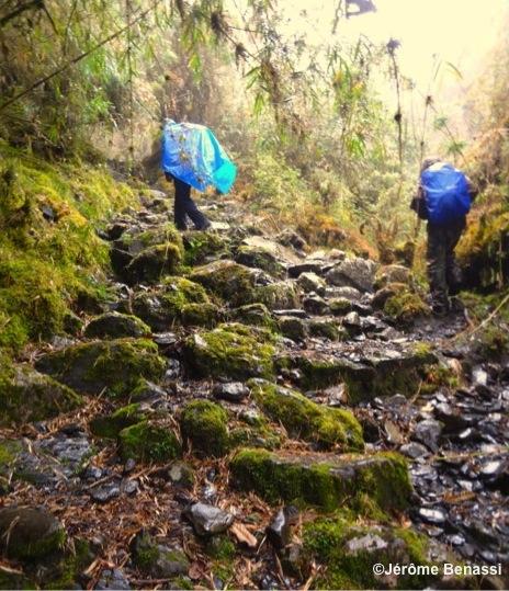 Treck-Jungle-Montagne-Pluie