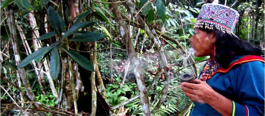 chamane-ayahuasca