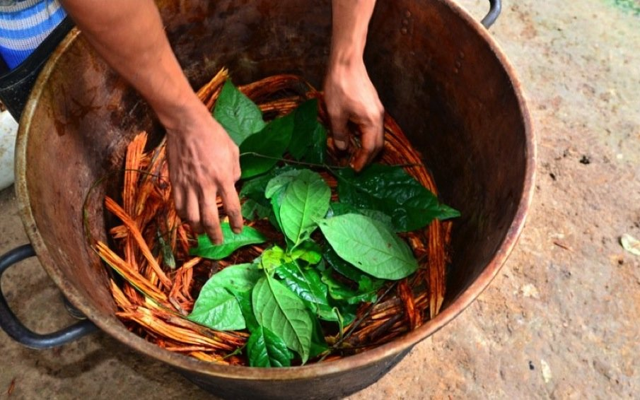 composants-ayahuasca