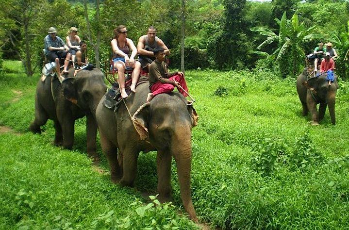 elephant-kohlanta